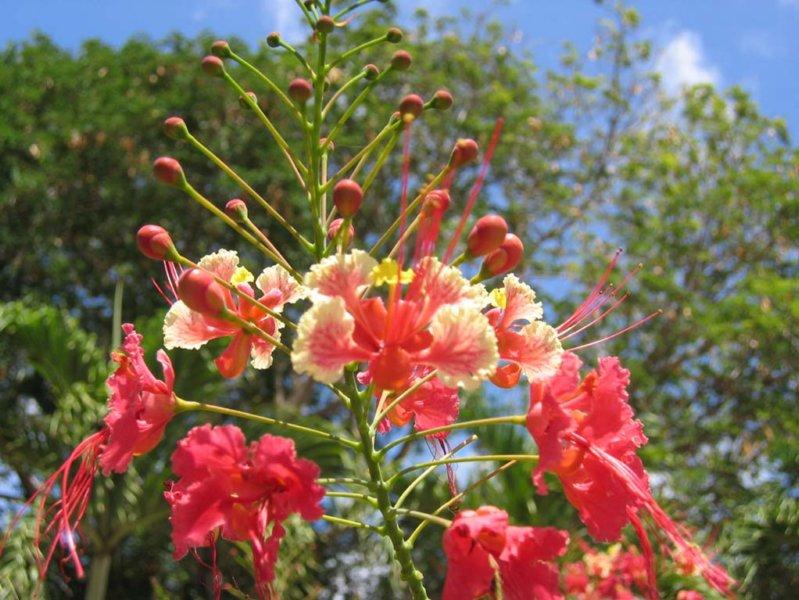 Tuturoetu flower villa sea paradise curacao