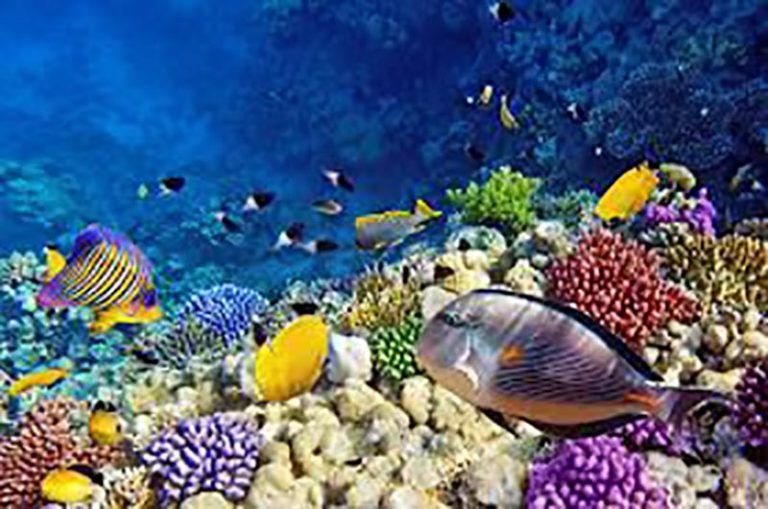 Corals -scuba dive Curacao Vacation Rental